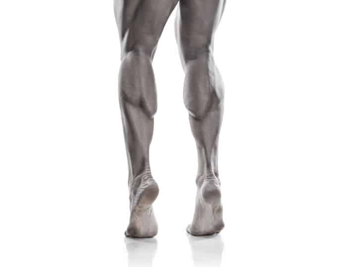 calf anatomy | all about the calf muscles, Cephalic Vein