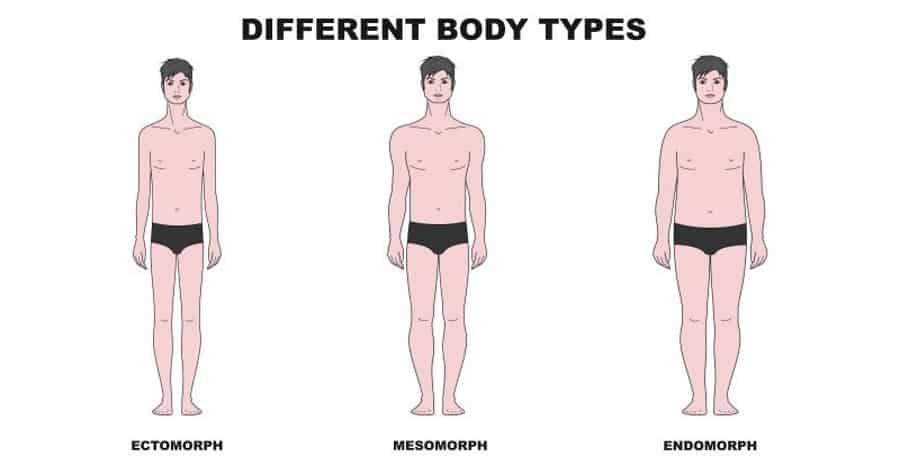 Different Body Types: Ectomorph Mesomorph Endomorph