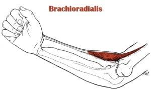 brachioradialis trigger point